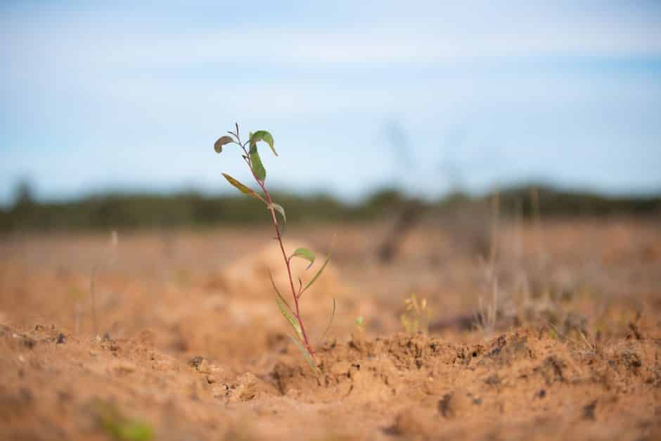 20 Million Trees Project - Dthinna Dthinnawan National Park