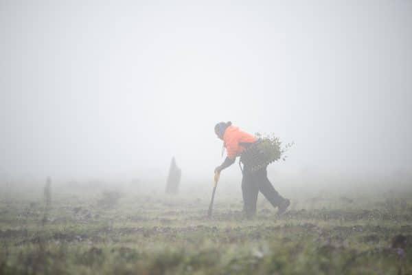 20 Million Trees Project - Dthinna Dthinnawan National Park. Photo: Vlad da Cunha.